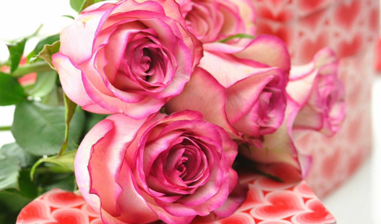 roses, розовый, розы, букет
