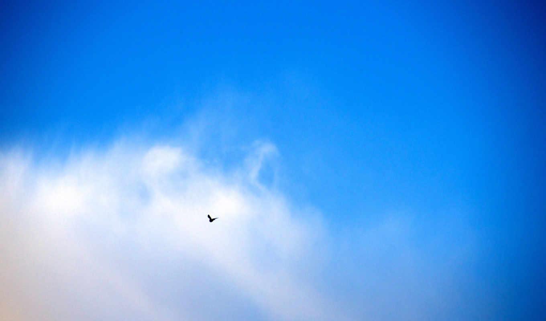 голубь, синиве, небесной, картинка, картинку, так, же, поделиться, картинками, мыши, понравившимися, кнопкой, салатовую, кномку, левой, кликните,