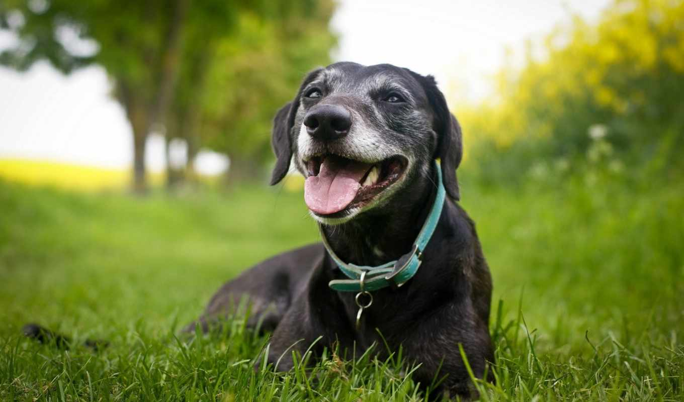 dog, animals, grass, animal, pet, mouth, with,