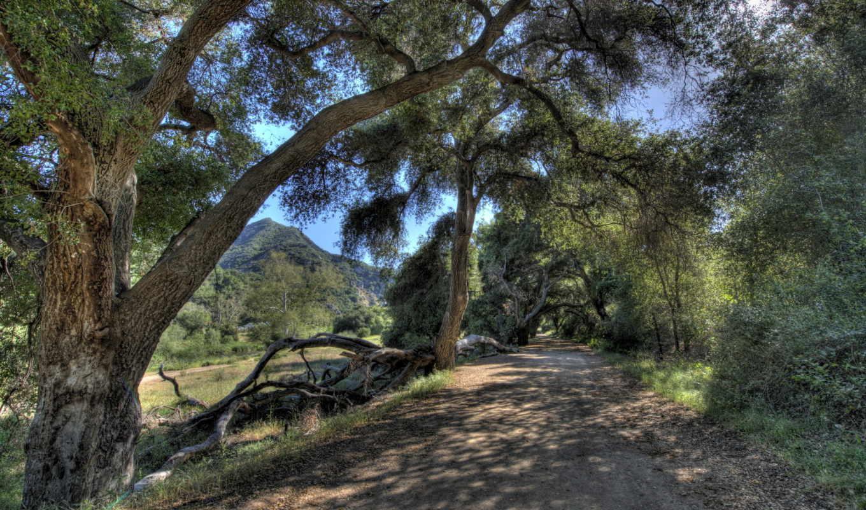 природа, hdr, калифорния, картинка, usa, ствол, дерева, malibu, дороги, landscape,