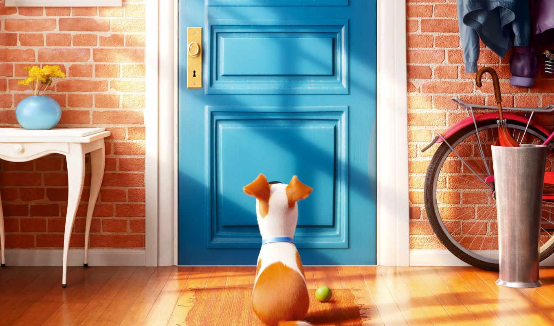 pets, life, secret, домашних, животных, тайная, new,