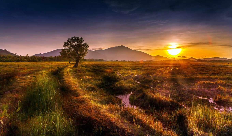 słońca, bagno, zachód, ка, drzewa, bagna, tapety, las, góry,