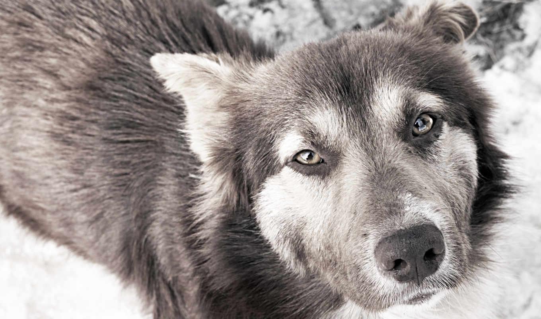 красивые, собака, свет, дворняжки, грусть, собаки, взгляд, полукровка,