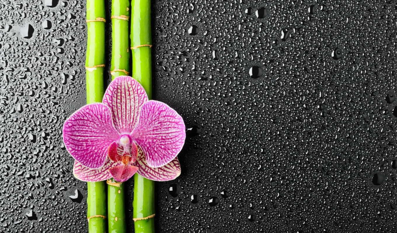 цветы, орхидея, бамбук, oir