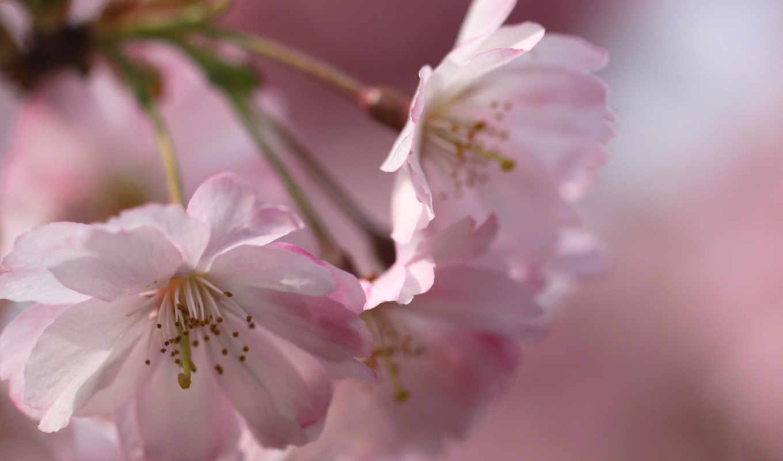 mixed, февр, цветы, весна, рассвета, best, pack,
