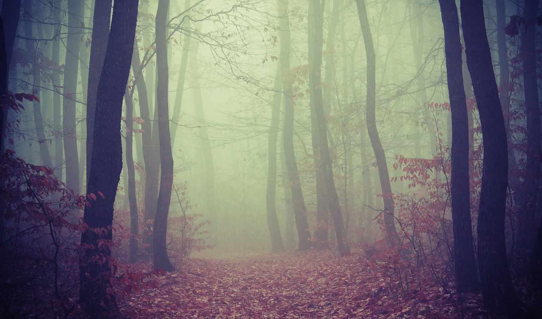 лес, foggy, дорога, лесу,