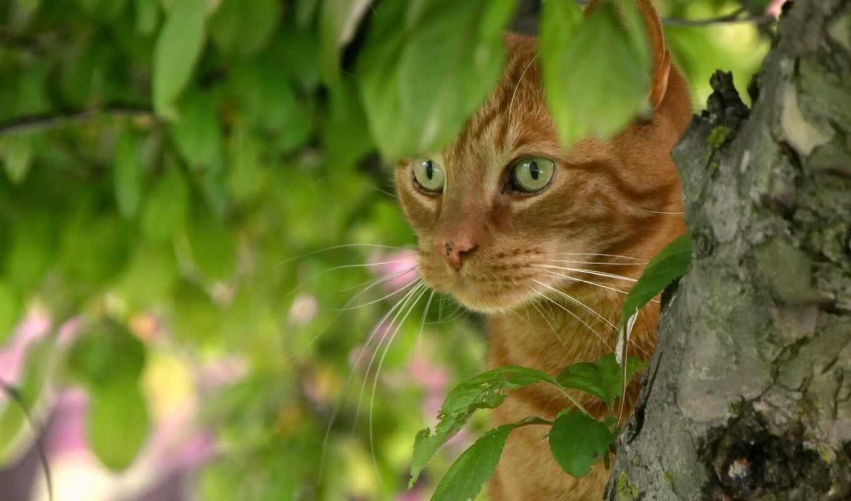 кот, зелёный