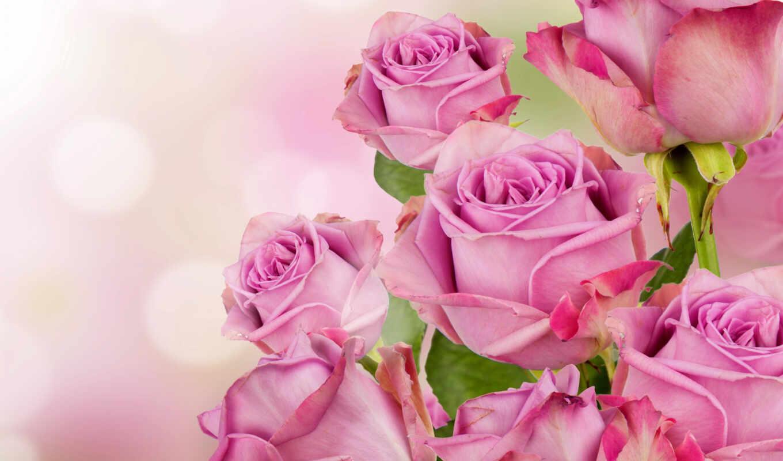 любимой, миникнижка, жене, розы, аффоризмами, розовые, женская, фоторамки, магните, книга,
