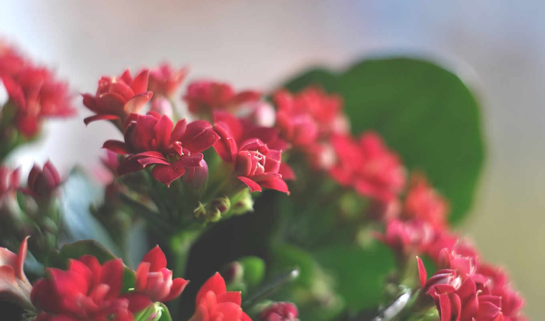 flowers, цветы, картинок, красивые, большое,