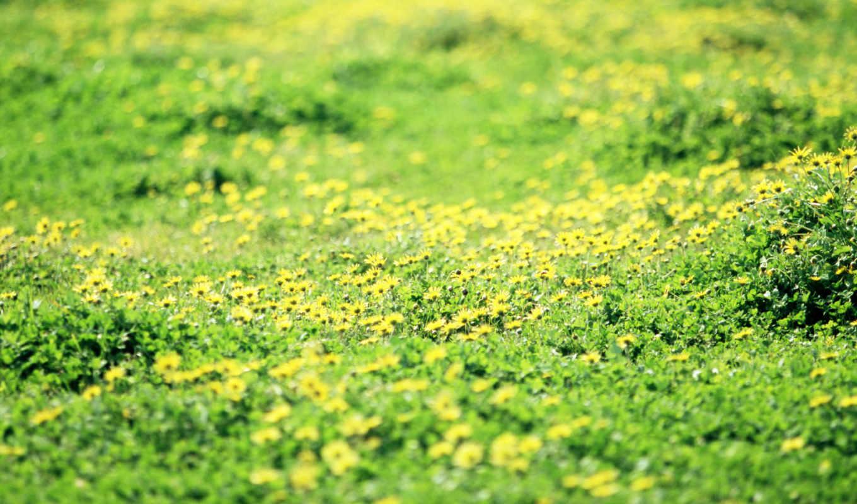cvety, galaxy, pole, цветов, red, flowers, samsung, дикие, priroda, bez,