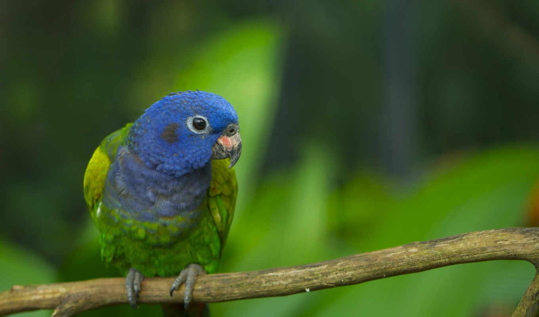попугай, зелёный, ветке, головой, сидит,