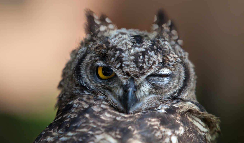 сова, настроение, глаз, птица, мигает, кнопкой, правой, птицы, животные, основа, виниловая, картинка, картинку, owl, winks, animals,
