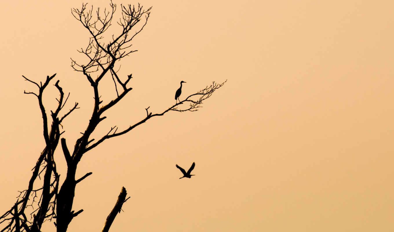 минимализм, птицы, дерево, картинка, код,