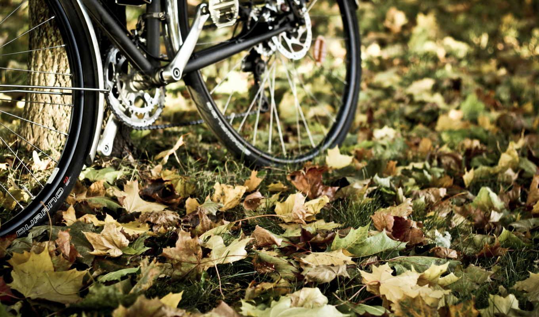велосипед, листья, осень, фото,