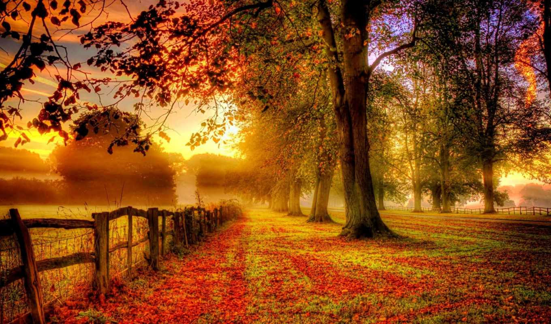 природа, осень, года, времена, деревья, листья, смотреть, обою,