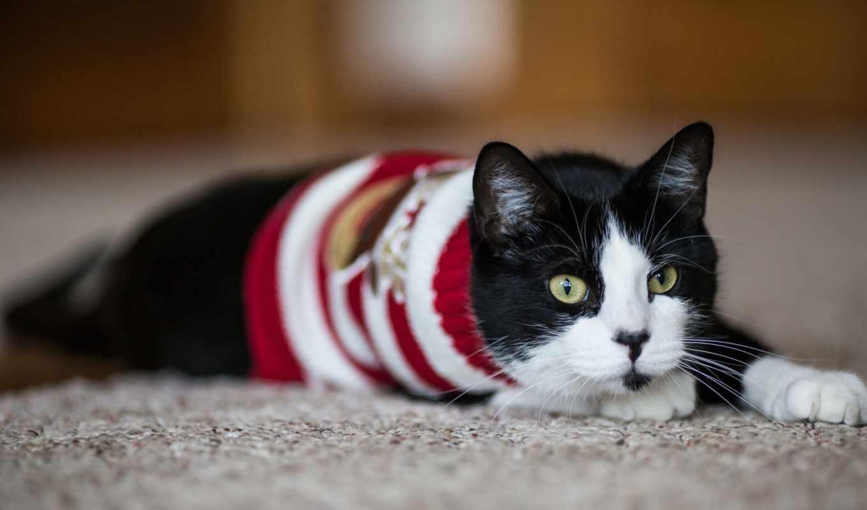 ,кот лежит, кот, кофта,черный кот,