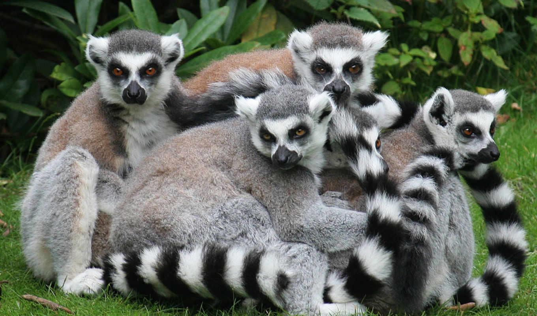 мадагаскар, животных, world, zhivotnye, sri, ланки, march, тропических, animal, пауков,