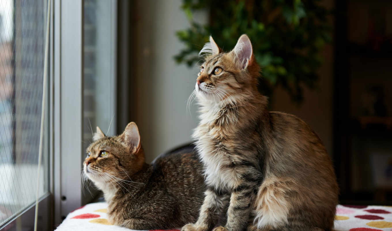 kittens,