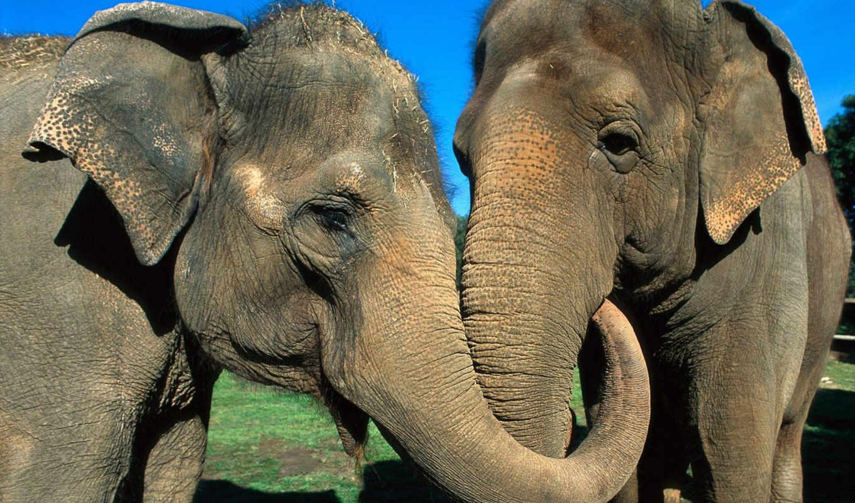животные, животных, love, самые, всегда,