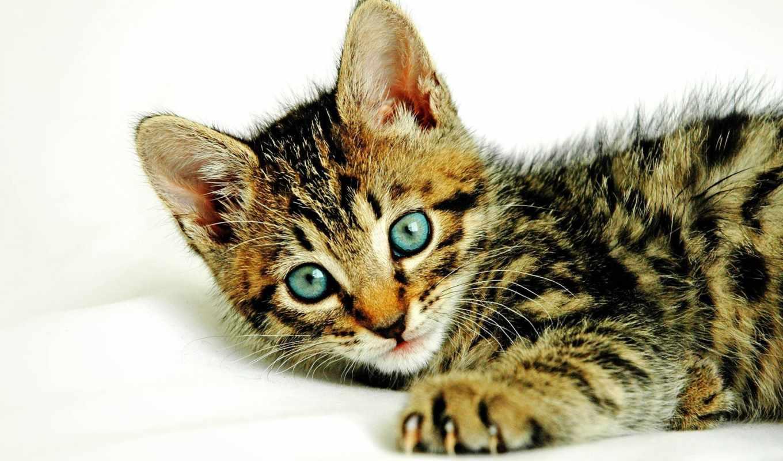gatos, gatitos, fotos, los, pequeños, imágenes, que, ternura, июня,