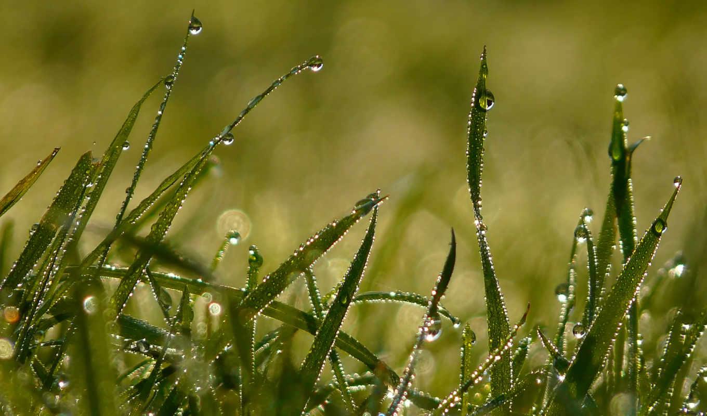 роса, трава, утро, summer,