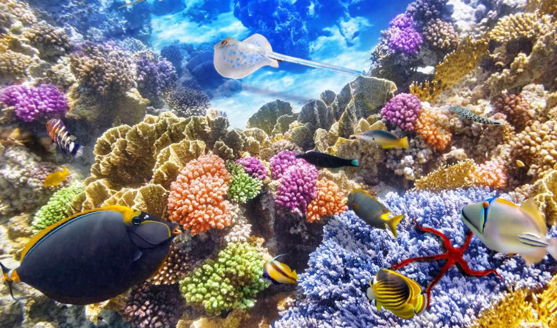 world, underwater, кораллы, pisces, zhivotnye, zoom, бесплатные,