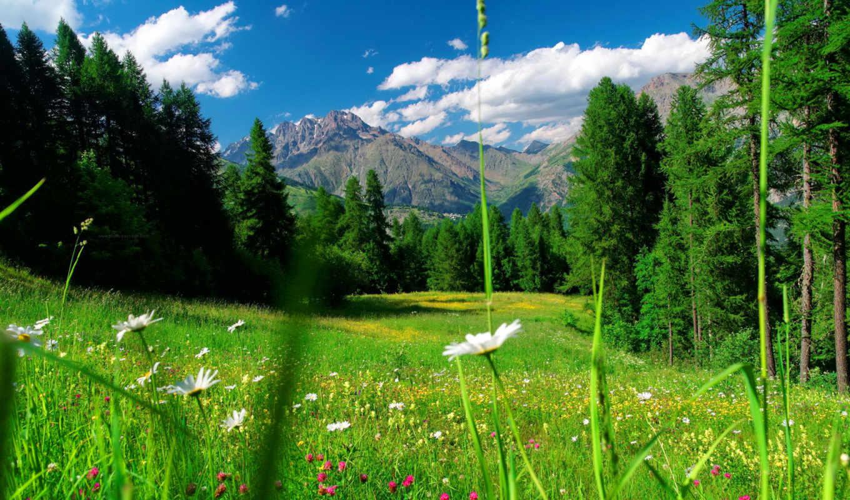 fleurs, montagne, des, ecrins, alpes, prairies, paysages, photos,