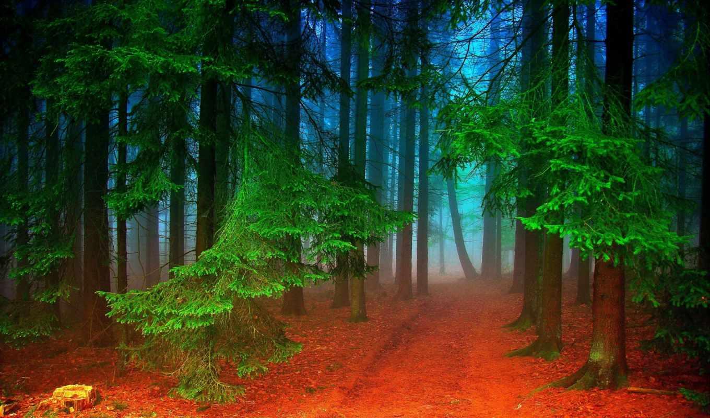 лес, природа,