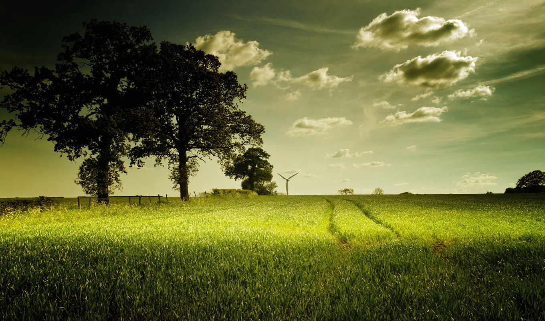 природа, summer, поле, landscape,