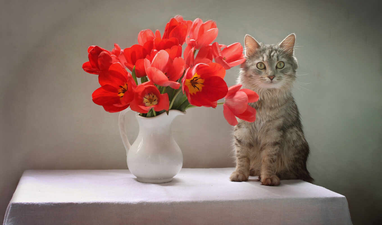 кот, цветы, life, еще, narrow, тюльпан, интерьер, светлана, хороший
