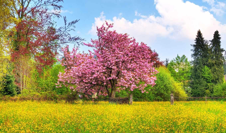 vesna, priroda, марта, cvety,