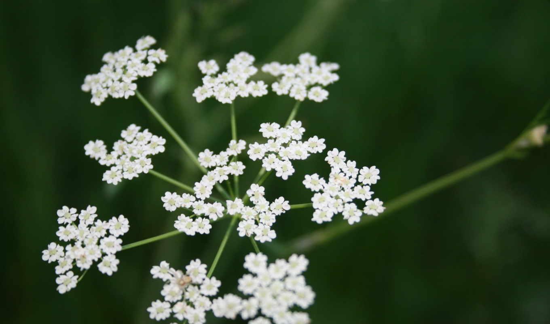 plants, природа, flowers, more, free, cvety,