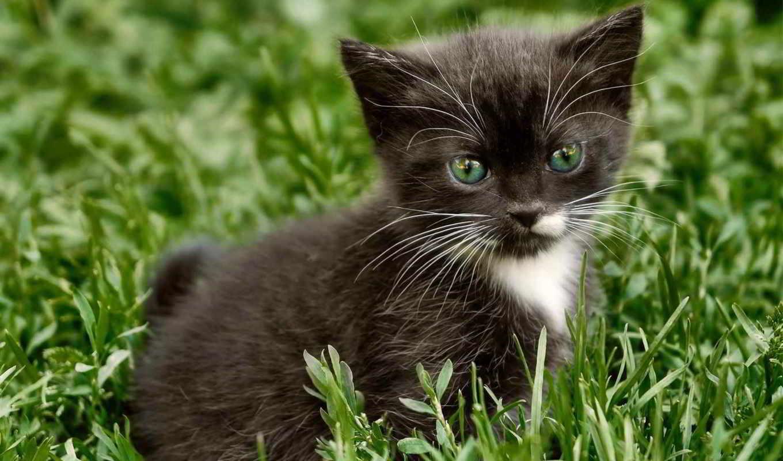 котенок, смотреть, трава, кошки, кот, zhivotnye,