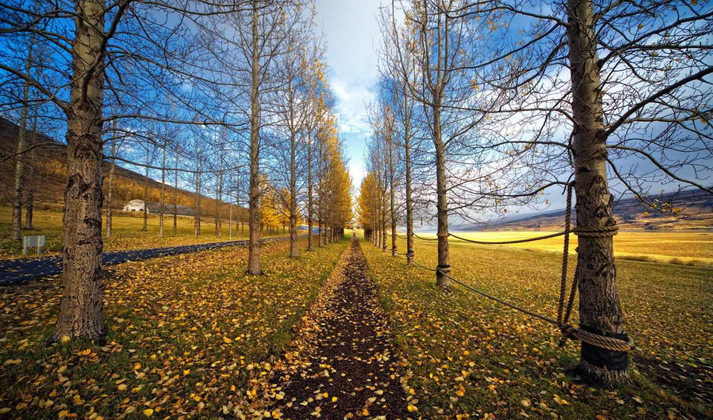 природа, осень, знаки, bwru, priroda, trees, дорога, шикарная,