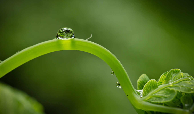 макро, зелень, жизнь, росток, капля, картинка,
