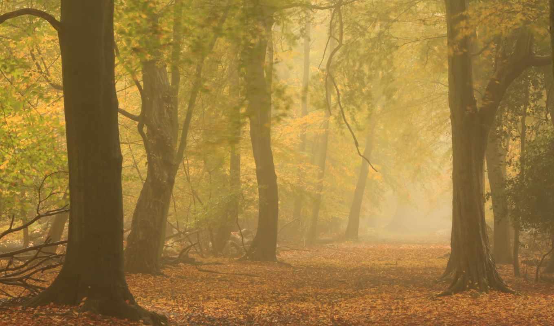 mist, осень, лес, дорога, resolution, природа, туман,