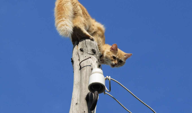jumping, tapeta, zwierzęta, коты, pulpit, tapety,