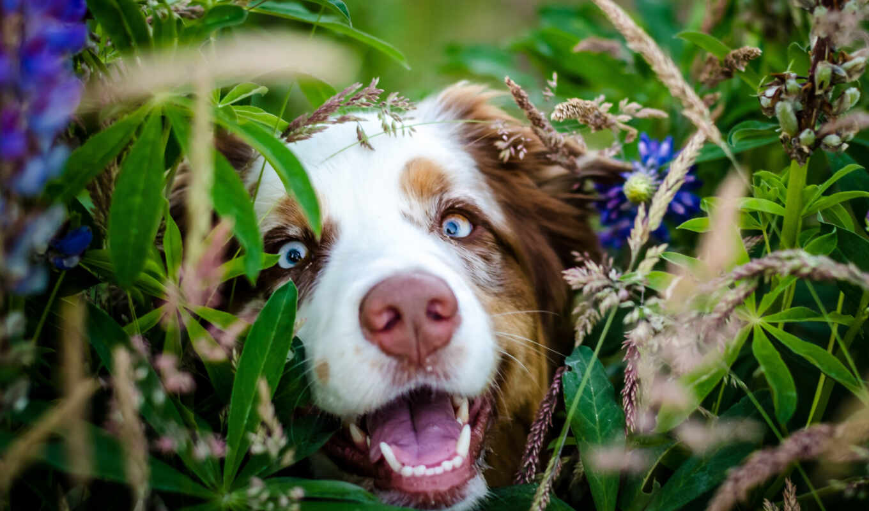 собака, цветы, kvety, tapety, pozadia, морда, праздник, obrázky, день, pes