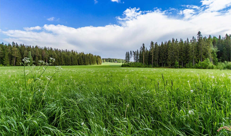 поле, лес, небо, landscape, трава, деревя, горы, природа, озеро,