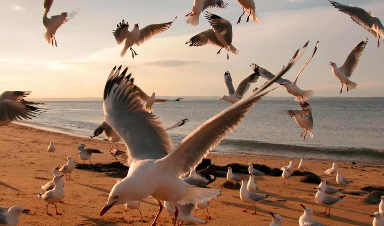 Белая птица на берегу скачать