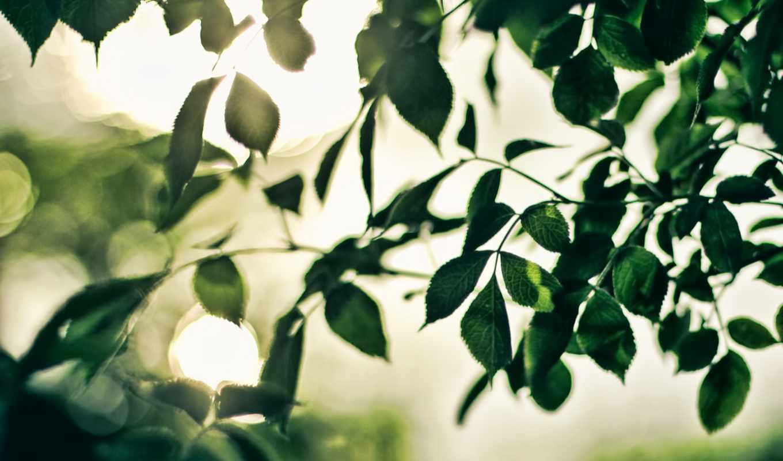 desktop, листва, web, pack, amazing, дерева, качества,