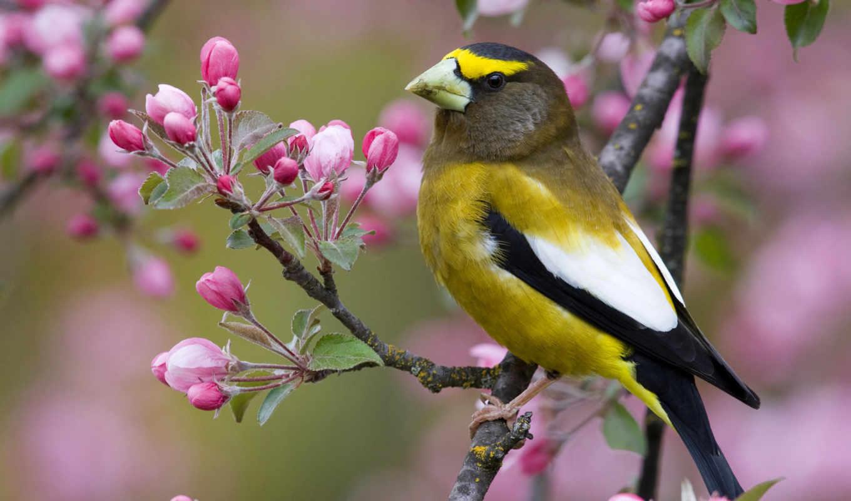 птица, дерева, ветке, сидит, девушки, цветущего, красивая,