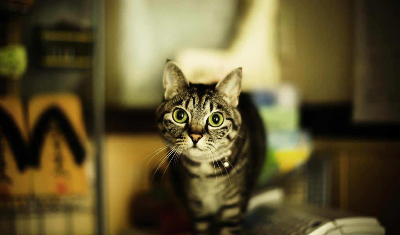 кот, свет, зелёный, кошки, cats, котенок, eyes, нравится,