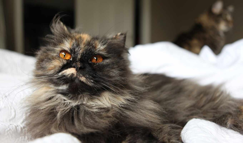 кот, пушистый, black, hairy, drawing, взгляд, white