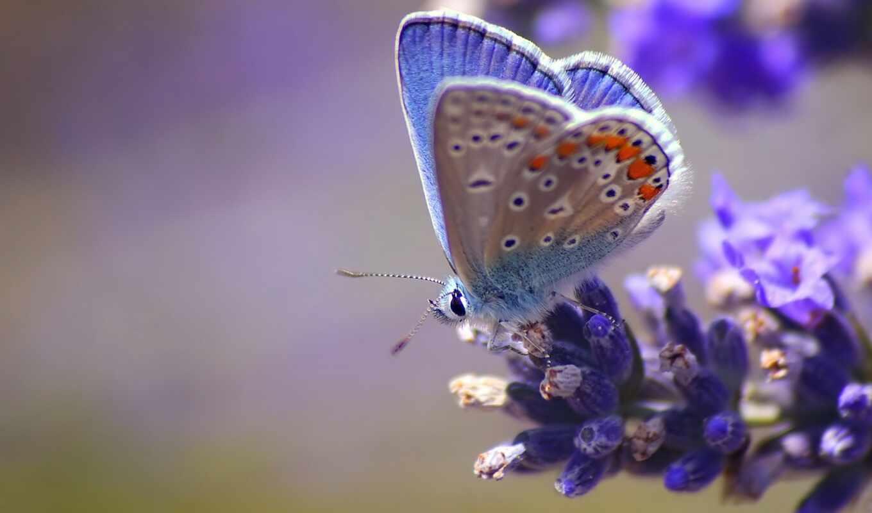 бабочка, крыло, цветы, vlinder, встречать, lente, фон, весна, achtergrond, bloeman