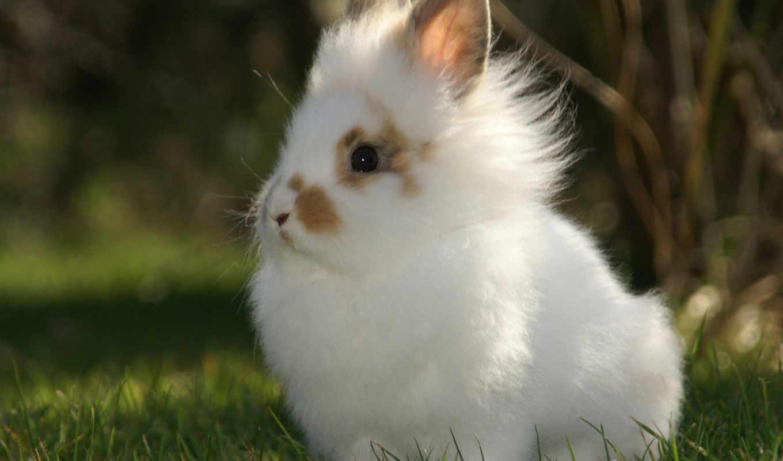 кролик, животные, кролики, пушистый, пушистик, фотографии, кроликов,