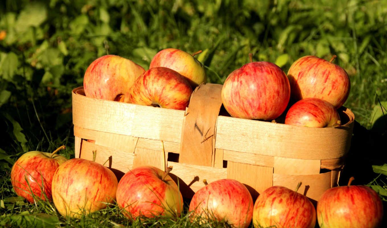 яблоки, корзина, трава,