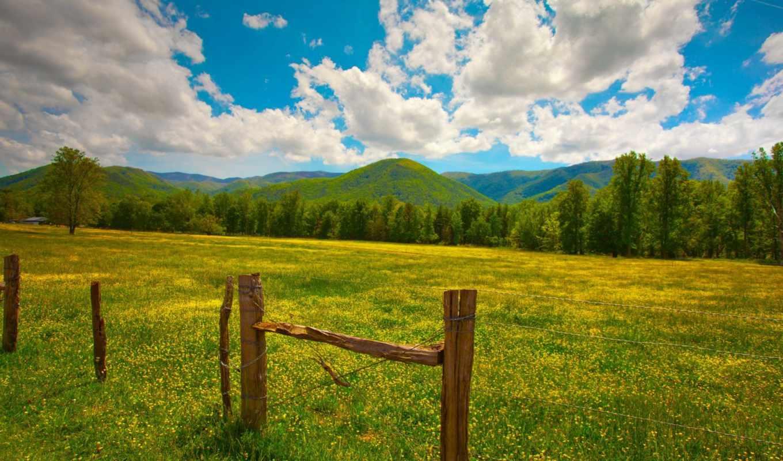 зелень, забор, лето, столбы, трава, цветы,