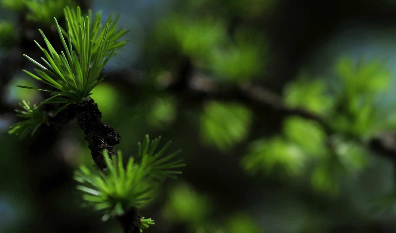 ветки, макро, блики, размытость, колючие, eli, branch, еловая, winter,