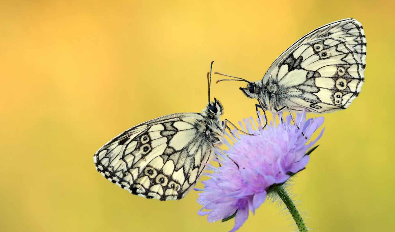 photos, you, flickr, butterflies, this, капли, бабочки, роса, butterfly,